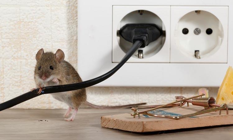 Защита систем видеонаблюдения от грызунов